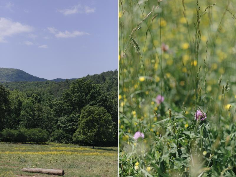 Aska-Farms-Blue-Ridge-Wedding-Michelle-Scott-Photography-4
